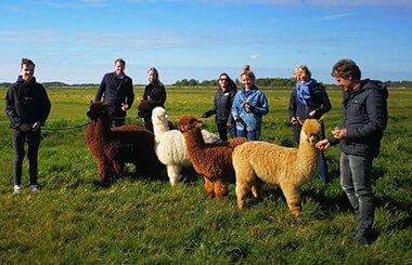 Alpaca-groepsuitjes-3